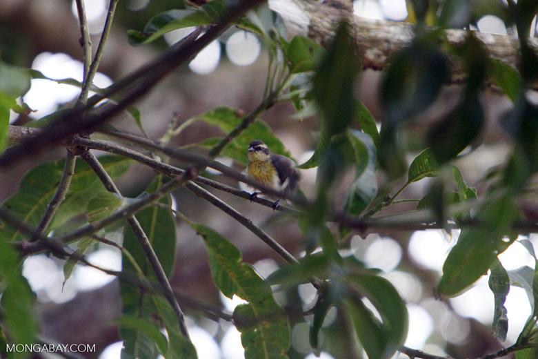 Bird [colombia_6178]