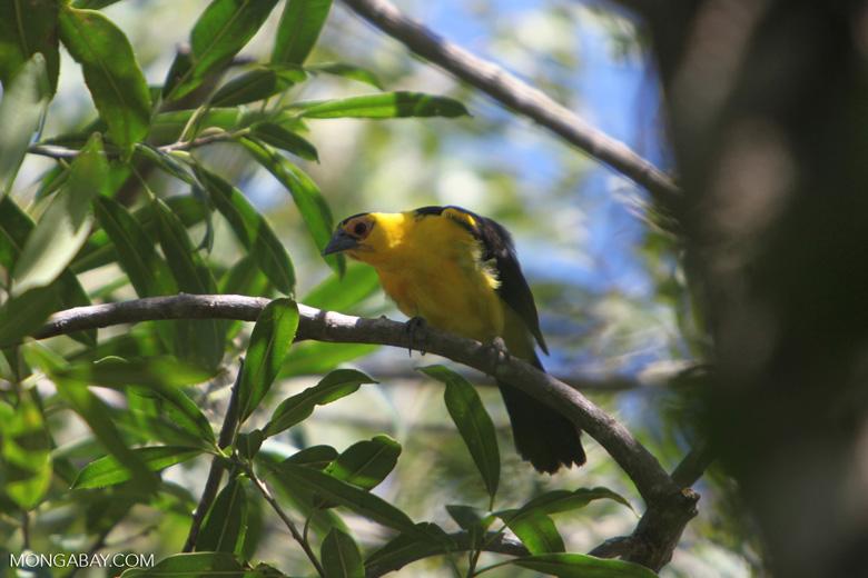 Bird [colombia_6251]