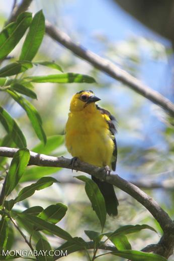 Bird [colombia_6256]