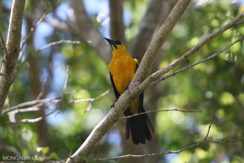 Bird [colombia_6264]