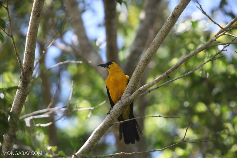 Bird [colombia_6266]