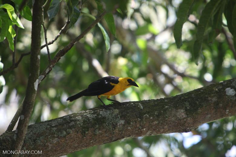 Bird [colombia_6525]