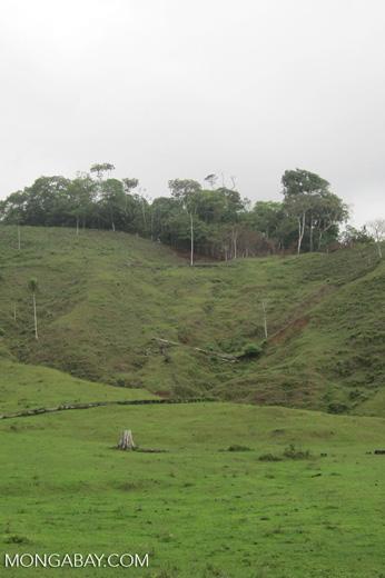 Pasture near Acandi [colombia_sd_0042]