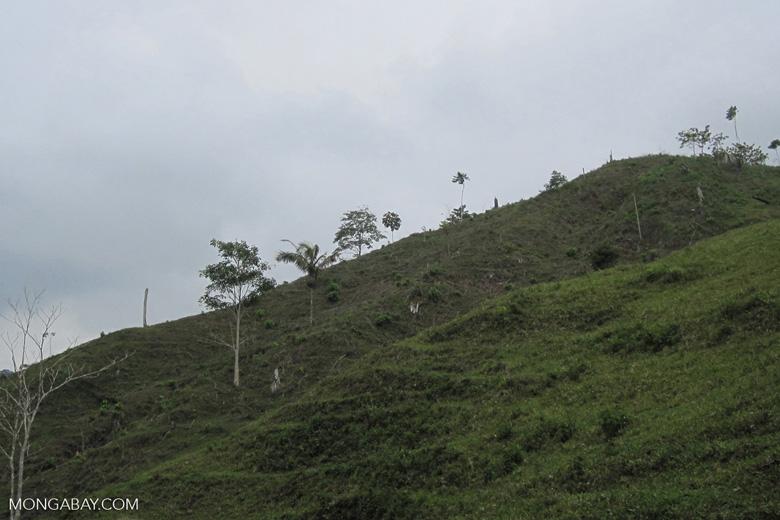 Deforestation for pasture