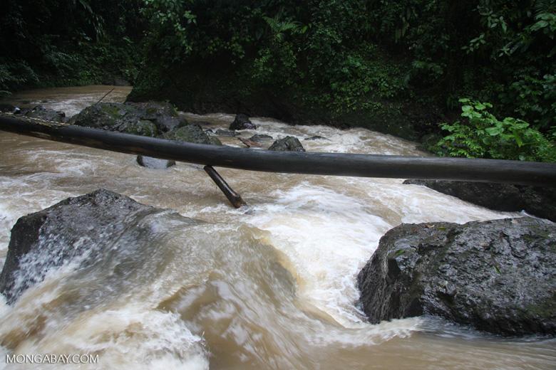 Rainforest creek near Leaves and Lizards