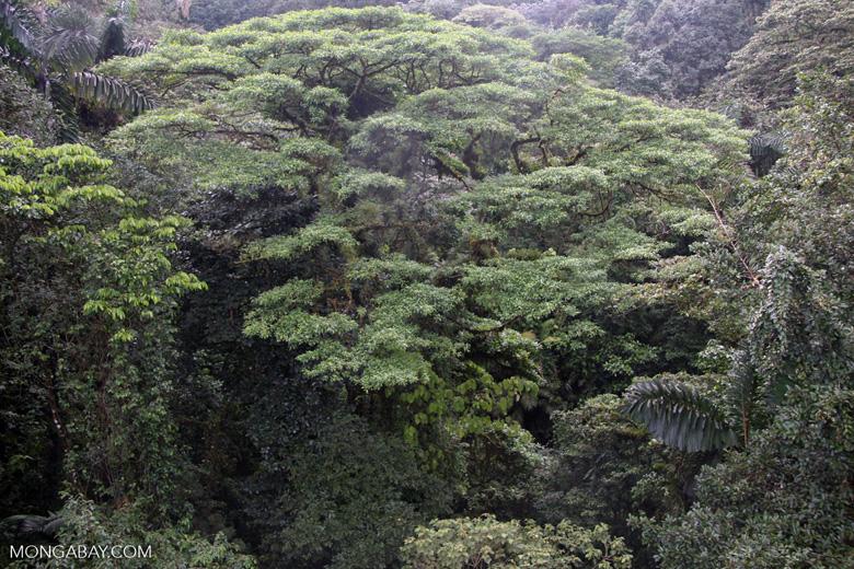 Rainforest canopy vegetation