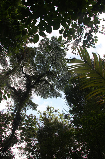 The rainforest canopy from below