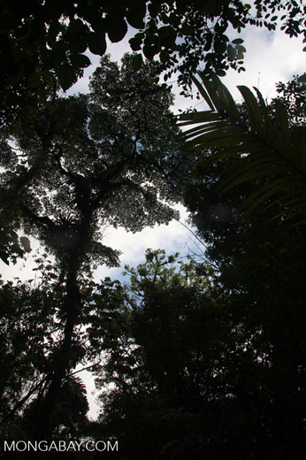 The rainforest canopy from below [costa-rica-d_0160]