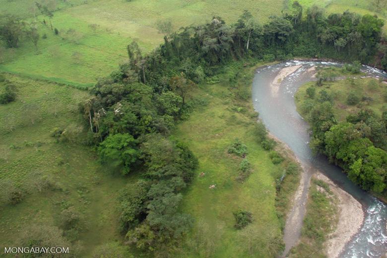 Gallery forest in Costa Rica [costa-rica-d_0178]