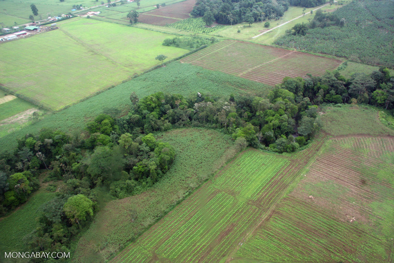 Gallery or riparian forest amid agricultural land in Costa Rica