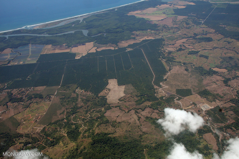 Aerial view of oil palm plantations on the Pacific coast of Costa Rica