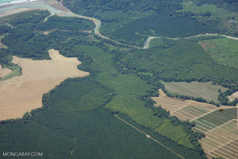 Aerial view of oil palm plantations near Quepos