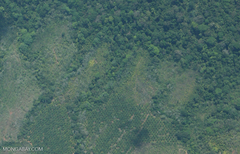 Aerial view of new oil palm plantations [costa-rica-d_0212]
