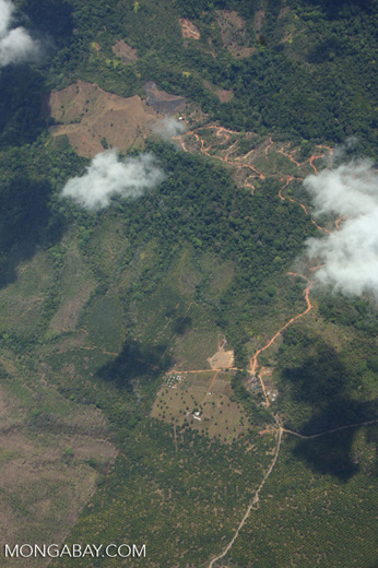 Aerial view of new oil palm plantations