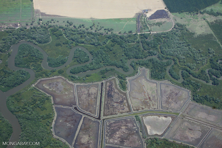 Aerial view of estuary, forests, and agriculture