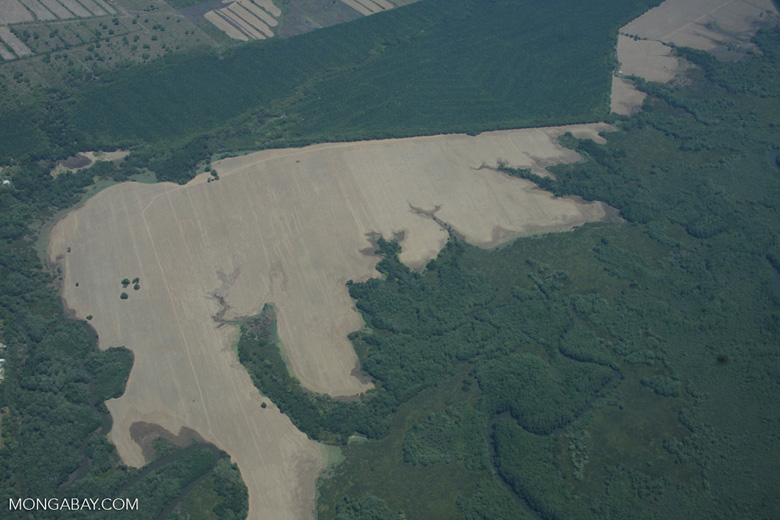 Deforestation, oil palm, and forest in Costa Rica