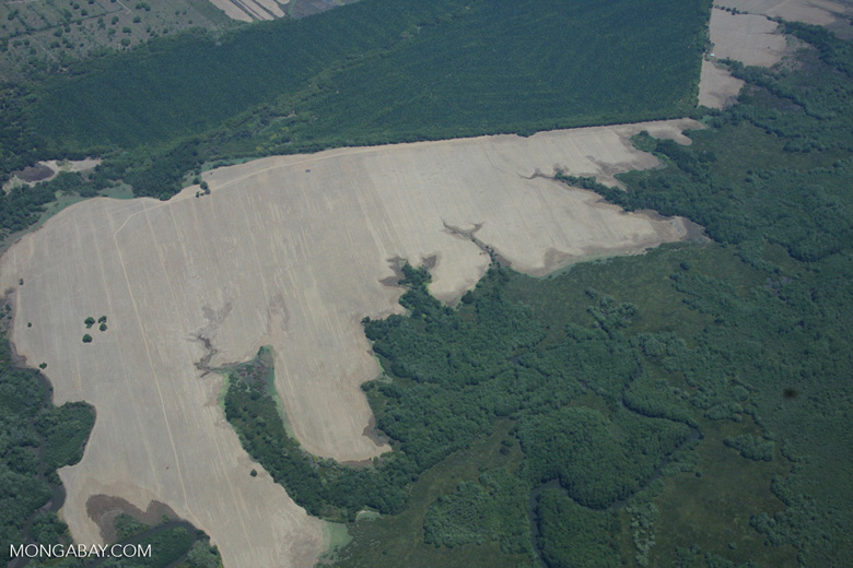 Deforestation, oil palm, forest, and wetlands in Costa Rica