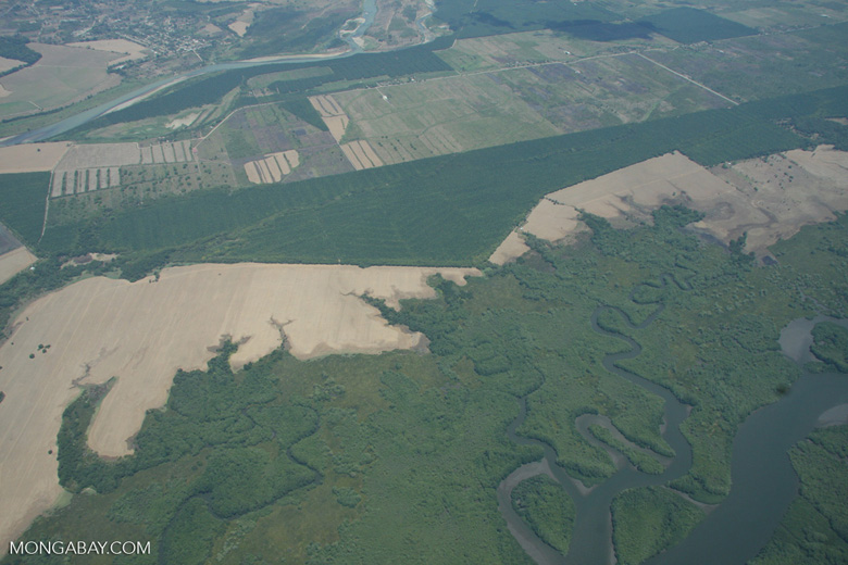 Deforestation, oil palm, forest, and wetlands in Costa Rica [costa-rica-d_0250]