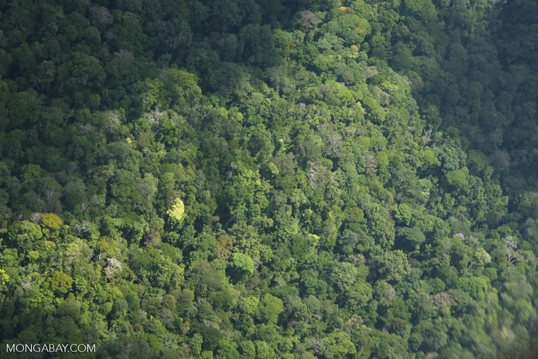 Aerial view of rainforest in southwestern Costa Rica