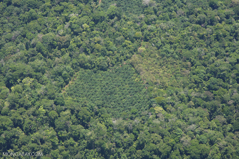 Aerial view of oil plantations amid forest in Costa Rica [costa-rica-d_0284]