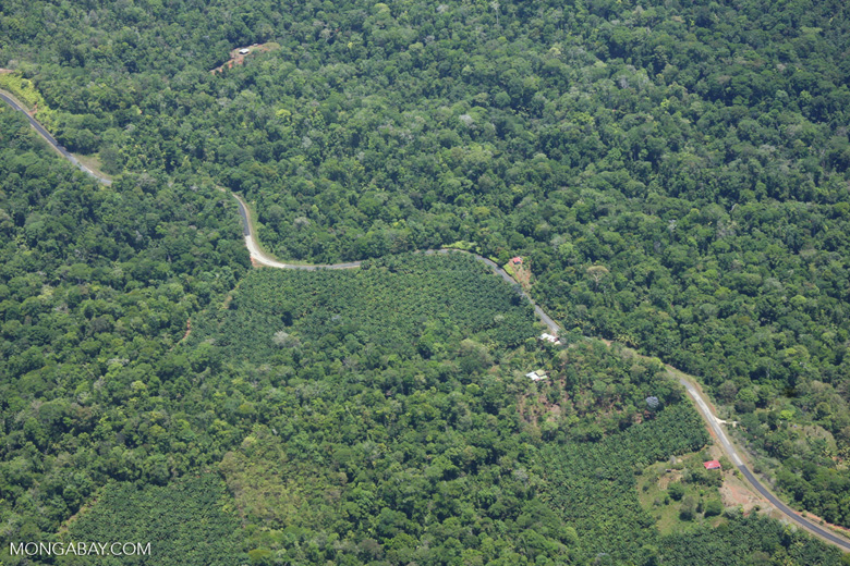 Aerial view of oil plantations amid forest in Costa Rica [costa-rica-d_0286]