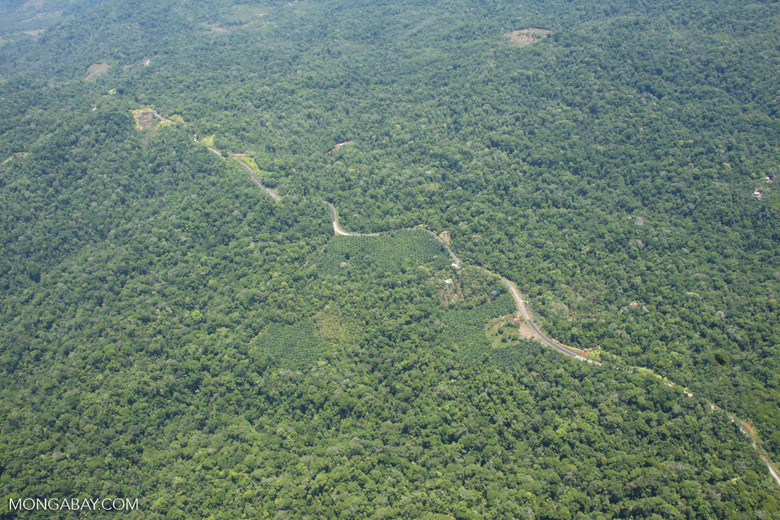 Aerial view of oil plantations amid forest in Costa Rica [costa-rica-d_0287]