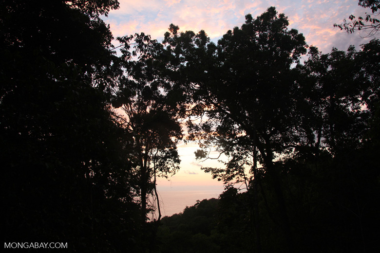 Rainforest sunset [costa-rica-d_0331]