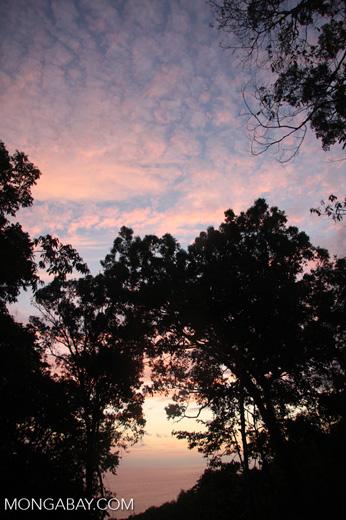 Rainforest sunset [costa-rica-d_0337]