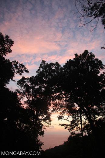 Rainforest sunset [costa-rica-d_0338]