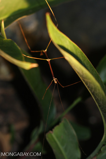 Walking stick with green and brown segments