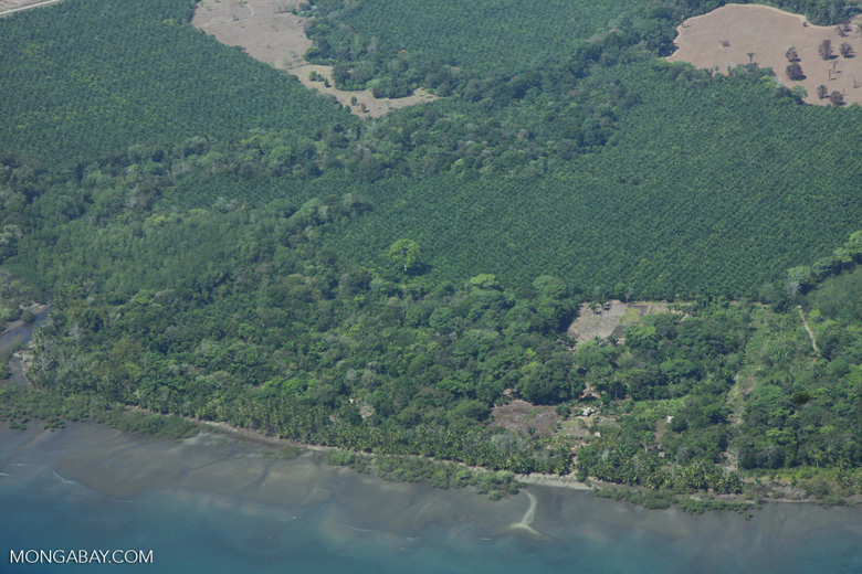 Overhead view of coastal oil palm plantations along the Golfo Dulce