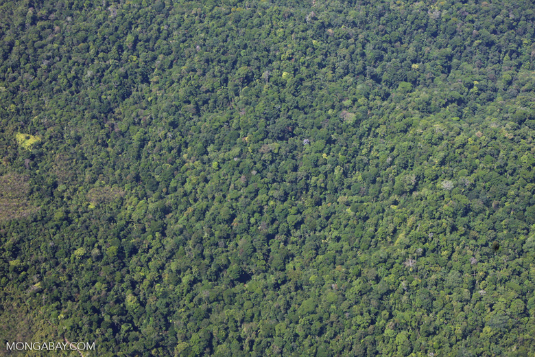 Aerial view of forest near Corcovado
