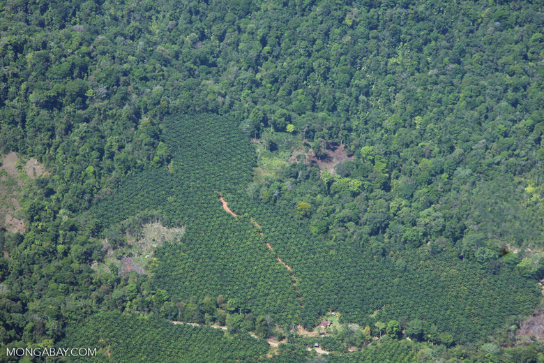 Oil palm plantation and forest in Costa Rica [costa-rica-d_0620]