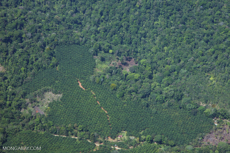 Oil palm plantation and forest in Costa Rica [costa-rica-d_0622]