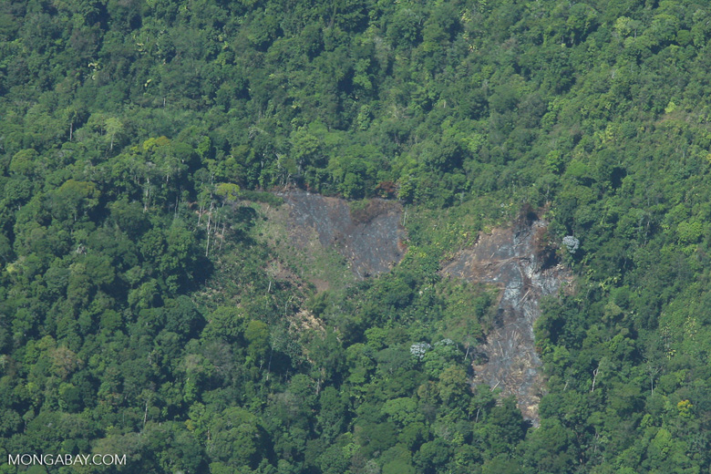 Aerial view of fresh forest clearing on a hillside for oil palm