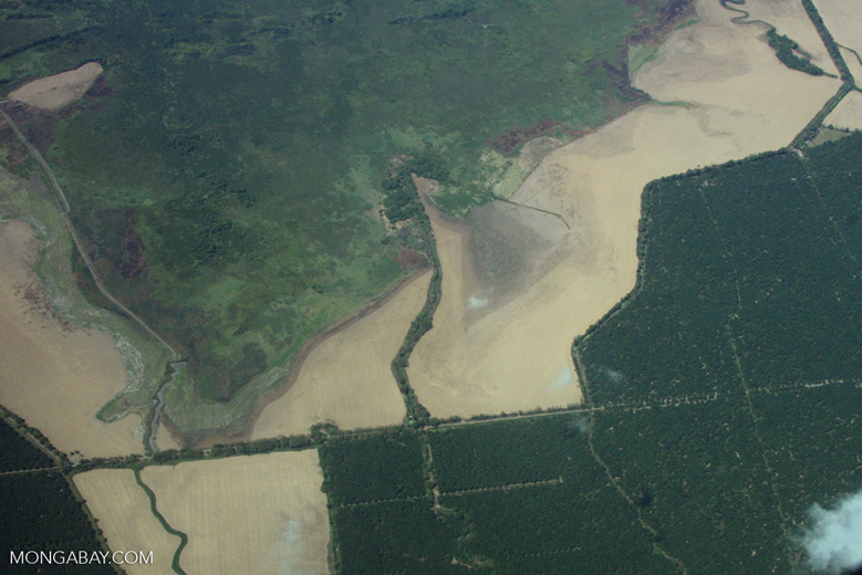 Aerial view of oil palm plantations in Costa Rica [costa-rica-d_0695]
