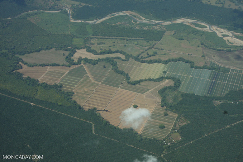 Overhead view of oil palm plantations in Costa Rica [costa-rica-d_0704]