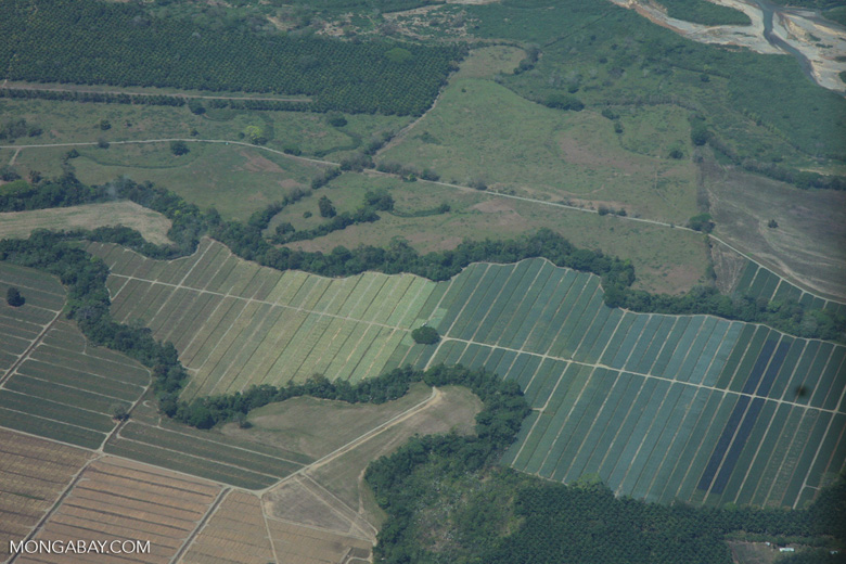 Overhead view of oil palm plantations in Costa Rica [costa-rica-d_0705]