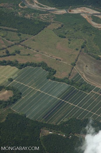 Overhead view of oil palm plantations in Costa Rica [costa-rica-d_0709]