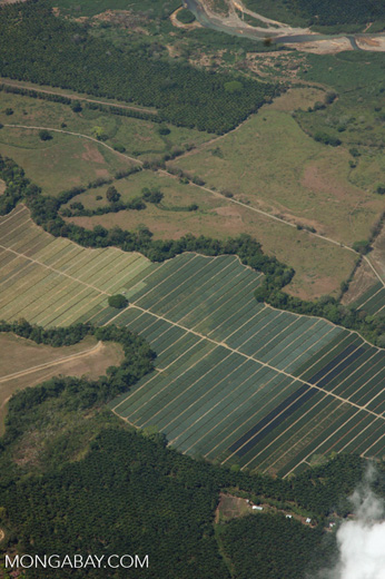 Overhead view of oil palm plantations in Costa Rica [costa-rica-d_0710]