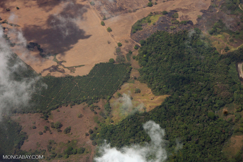 Aerial view of oil palm plantations and rainforest in Costa Rica