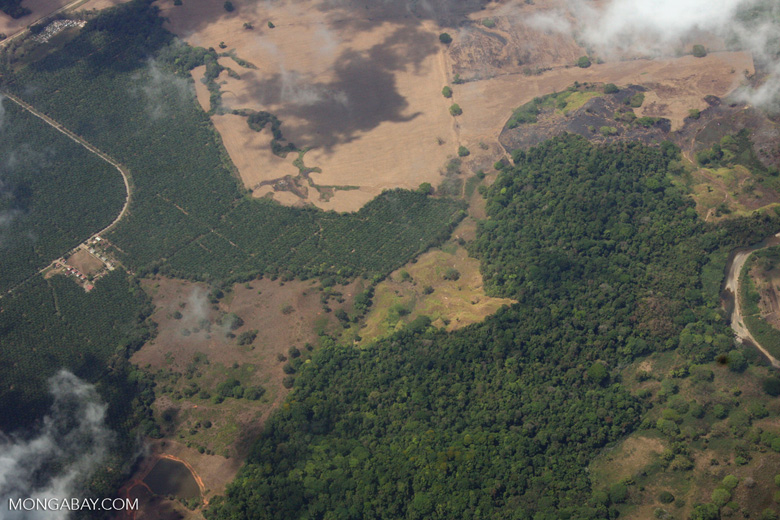 Aerial view of oil palm plantations and rainforest in Costa Rica [costa-rica-d_0722]