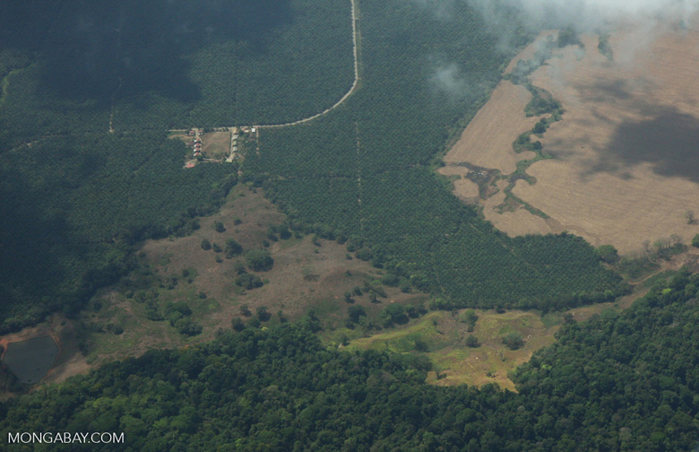 Aerial view of oil palm plantations and rainforest in Costa Rica [costa-rica-d_0729]