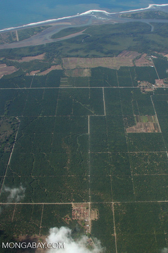 Industrial oil palm plantations in Costa Rica