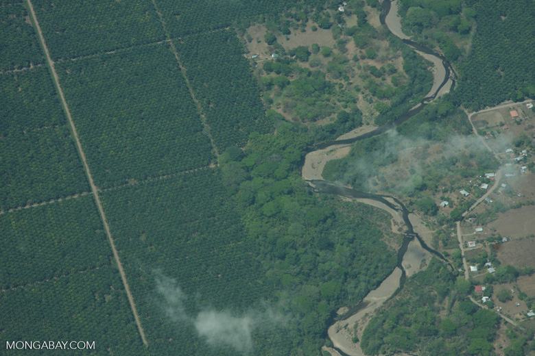 Aerial view of industrial oil palm plantations in Costa Rica [costa-rica-d_0737]