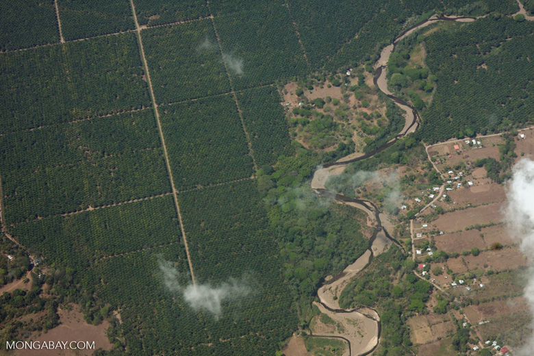 Aerial view of industrial oil palm plantations in Costa Rica