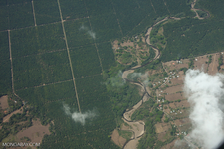 Aerial view of industrial oil palm plantations in Costa Rica [costa-rica-d_0741]