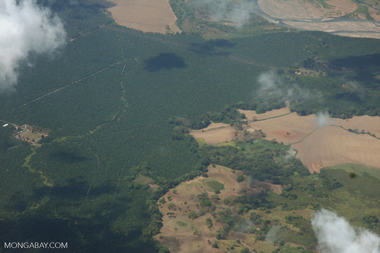Airplane view of industrial oil palm estates in Costa Rica [costa-rica-d_0761]