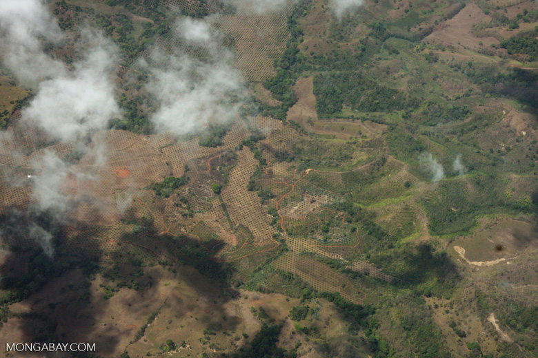 Aerial view of new oil palm plantations in Costa Rica [costa-rica-d_0762a]