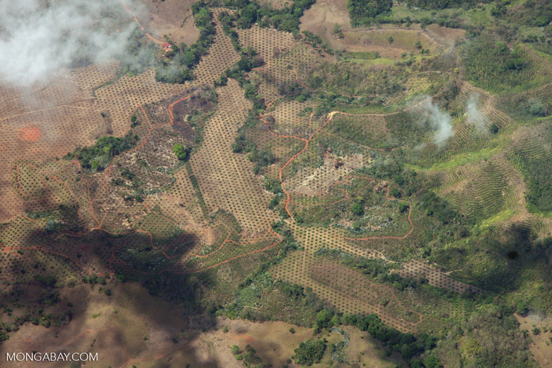 Airplane view of new oil palm plantations in Costa Rica